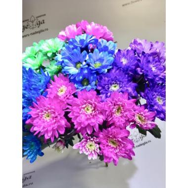 Хризантема м/ц крашеная